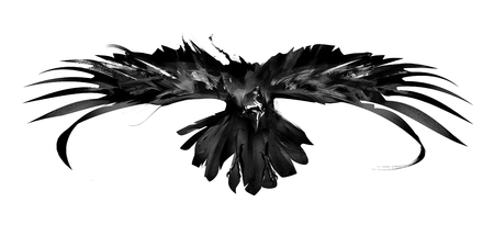 sketch flying bird crow front view