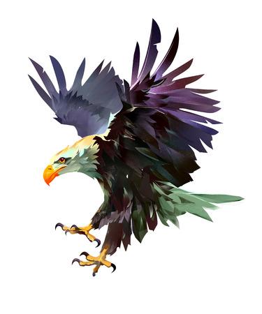 bright painted bird eagle in flight