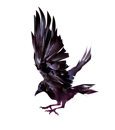 isolated realistic sketch of a flying bird of crows
