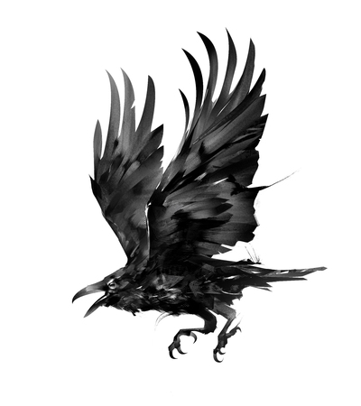 sketch isolated flying bird rook on the side
