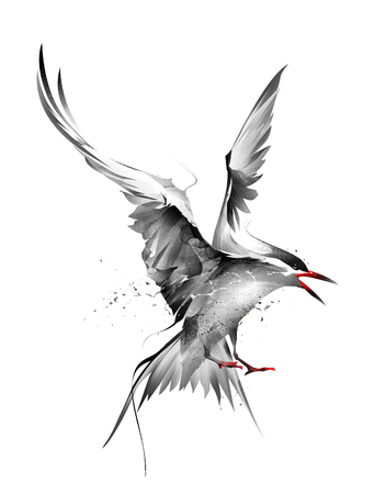painted bird Arctic Tern in flight on a white background 版權商用圖片 - 100402106