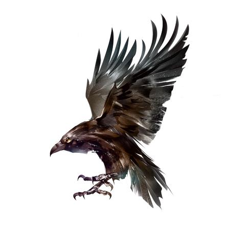 color isolated sketch bird crow in flight