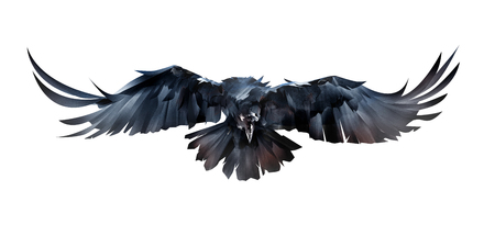 painted on white background flying bird raven in front