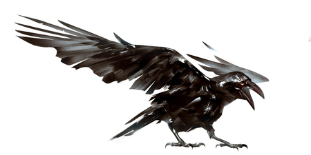 drawn isolated the bird Raven on the wing
