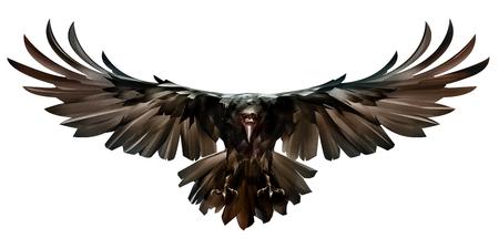 bird in flight raven front