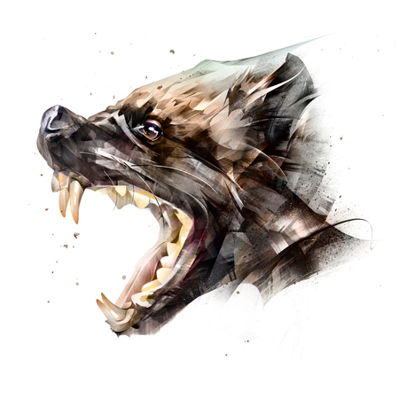 drawing animal muzzle wolverine side view on a white background Фото со стока