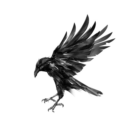 latający widok z boku wrony na białym tle