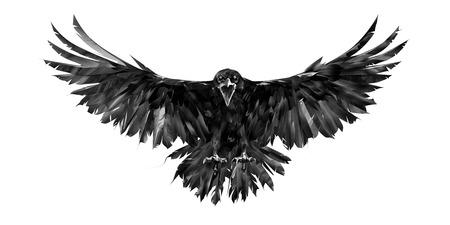 retrato pintado de un cuervo sobre un fondo blanco en la parte delantera con una envergadura