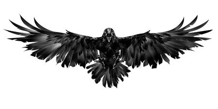 drawn flying raven on a white background