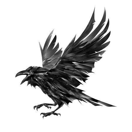pájaro cuervo volador pintado sobre un fondo blanco