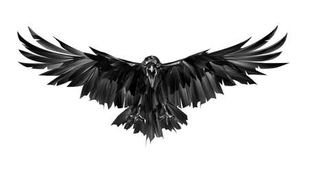 painted on a white background bird crow in attack front view Foto de archivo