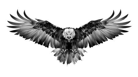 hand drawn graphics bird eagle front view on white background
