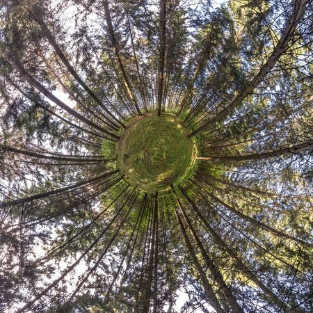 Little planet transformation of spherical panorama 360 degrees. Spherical abstract aerial view in forest. Curvature of space.