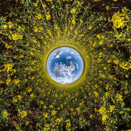 inversion of Little planet transformation of spherical panorama 360 degrees. Spherical abstract aerial view in rapeseed field with awesome beautiful clouds. Curvature of space.