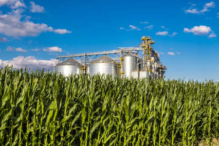 Modern Granary elevator. Silver silos on agro-processing and manufacturing plant for processing drying cleaning and storage of agricultural products, flour, cereals and grain. Stock Photo