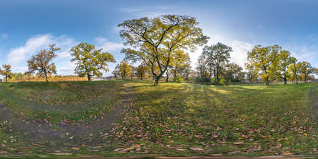 full seamless spherical hdri panorama 360 degrees angle view of beautiful landscape in oak grove with clumsy branches in gold autumn in equirectangular projection, ready VR AR content Banco de Imagens