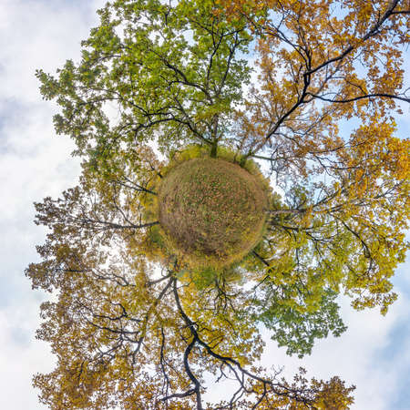 tiny planet transformation of spherical panorama 360 degrees. Spherical abstract aerial view in oak grove with clumsy branches in gold autumn. Curvature of space.
