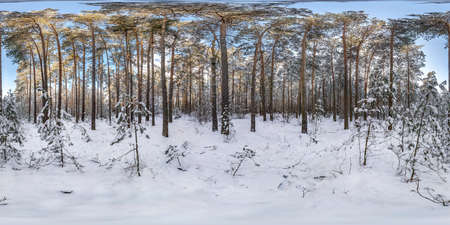 Winter full spherical hdri panorama 360 degrees angle view in snowy pinery forest with blue sky and sunny day in equirectangular projection. VR AR content
