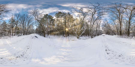 Winter full spherical hdri panorama 360 degrees angle view in snowy pinery forest with blue sky and sunny evening in equirectangular projection. VR AR content
