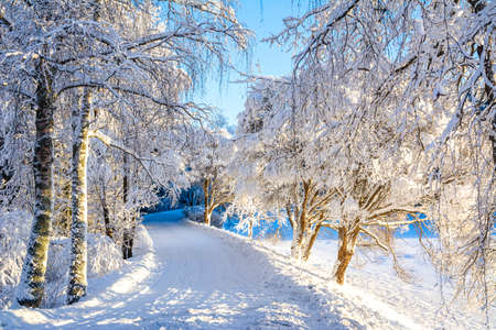 Mellonlahti nature trail, winter view, Imatra, Finland