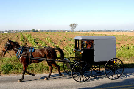 amish buggy: Horse drawm buggy