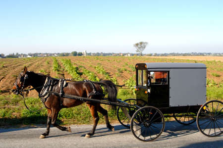 horse drawn carriage: Amish Carriage horse drawn