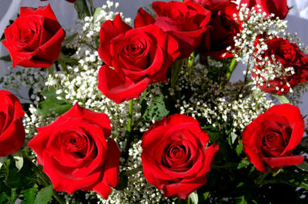Bunch of red roses with white  breath Stock Photo