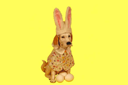 Dog statue dressed for Easter