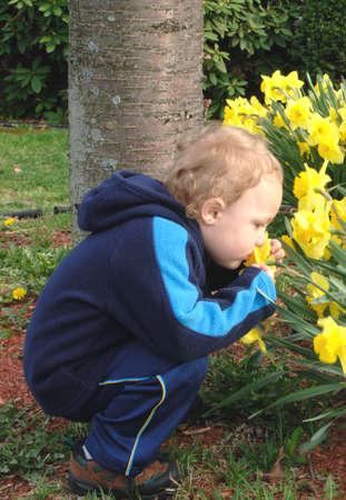 Toddler smelling daffodils Banco de Imagens
