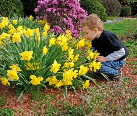 Young boy squatting smelling daffodils