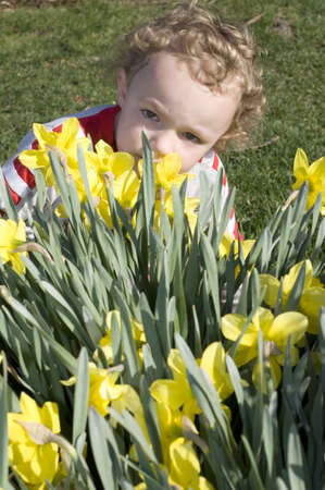 Young boy smelling yellow daffodil flowers outside