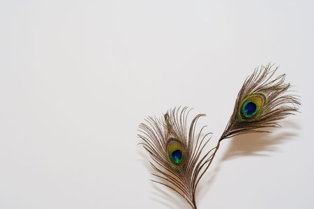 primp: a peacock feather in a white background Stock Photo