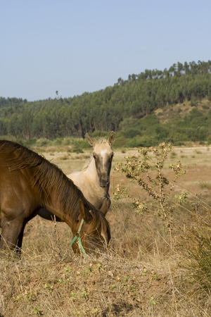 a young horse at the contryside with his mother photo