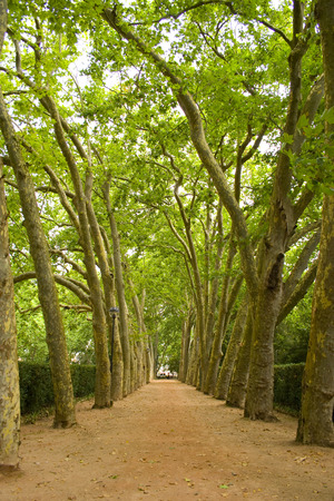road and path through: a perspective path in a public garden