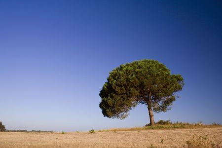 a lonely tree on a field with a blue sky Stock Photo - 1769975
