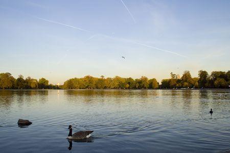 ducks in a lake park in London Stock Photo - 1874260