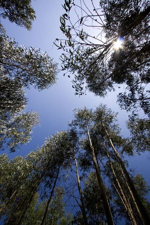 a wide angle view of forest trees photo