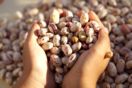 Hands full of beans (selective focus) photo