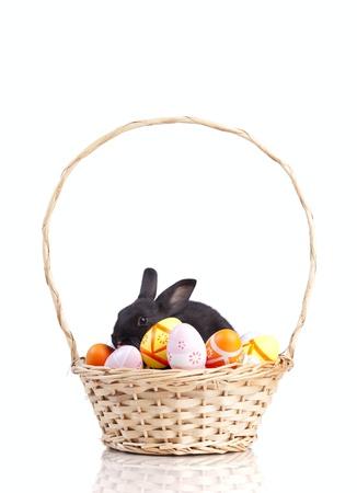 white rabbit: Easter rabbit inside a basket full of painted easter eggs  (isolated on white)