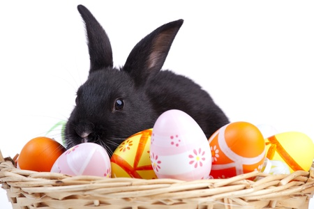 bunnie: Easter rabbit inside a basket full of painted easter eggs  (isolated on white)