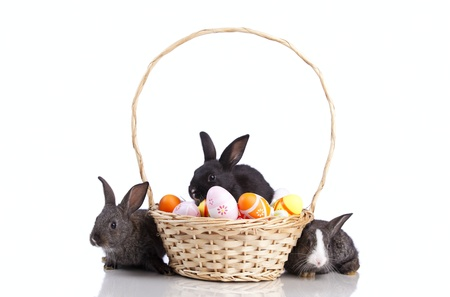 Easter rabbit inside a basket full of painted easter eggs  (isolated on white) photo