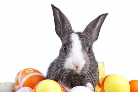 Cute rabbit with easter eggs arround him  (isolated on white) photo