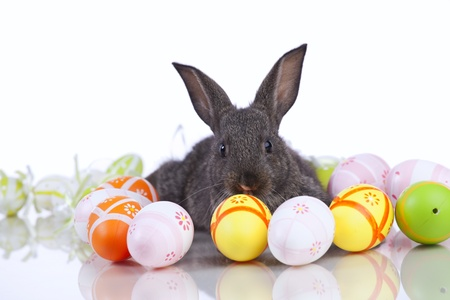 bunnie: Rabbit playing with a easter egg  (isolated on white) Stock Photo