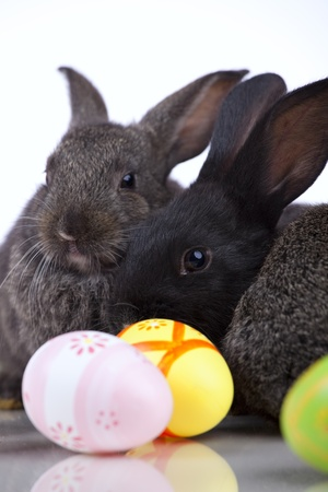 Rabbits next to some painted easter eggs photo
