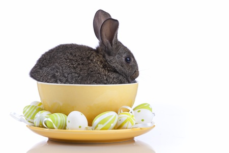 Rabbit inside a bowl full of painted easter eggs (isolated on white) photo