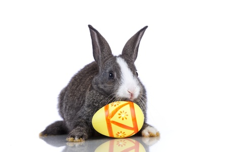 Rabbit playing with a painted egg  (isolated on white) photo
