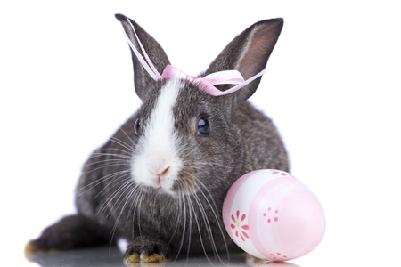 fluffy ears: Female easter rabbit with a pink easter egg  (isolated on white)