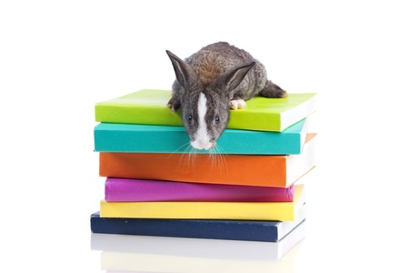 Rabbit over a stack of books (isolated on white) Stock Photo - 10035861