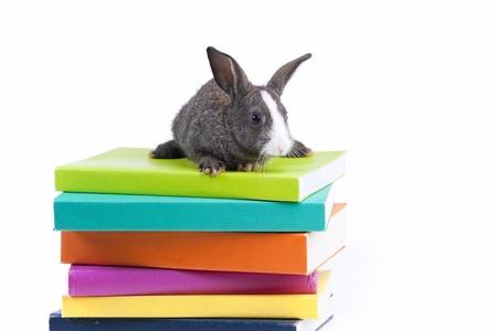 Lapin sur une pile de livres (isolée sur fond blanc) Banque d'images