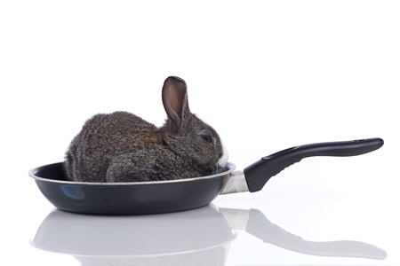 Rabbit inside a frying pan (isolated on white) photo